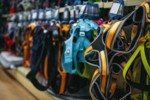 Harness Options for Cats
